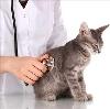 Ветеринарные клиники в Борисоглебске